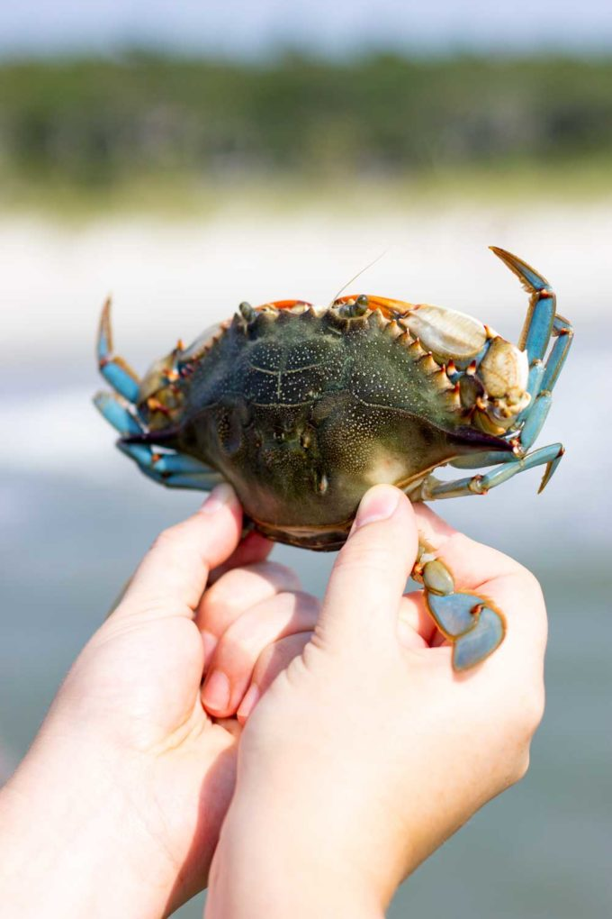 Crabbing at the state park in Myrtle Beach