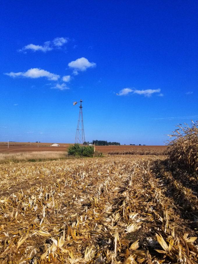 Farm in Iowa, where corn is grown